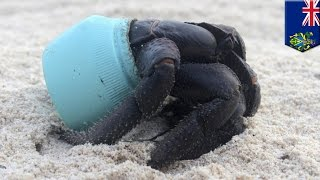 Ocean pollution: Remote, uninhabited Henderson Island is covered in our garbage - TomoNews