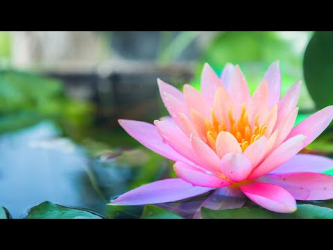 Relaxing Music 24/7, Spa Music, Meditation, Healing Music, S