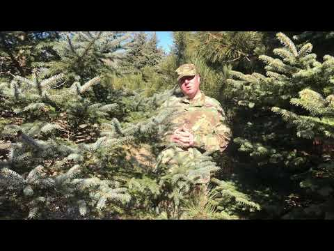 Mini Camouflage Tests: U.S. OCP Spring-Time in Northern Wisconsin