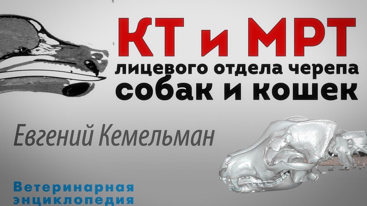 КТ, МРТ лицевого отдела черепа у собак и кошек - YouTube