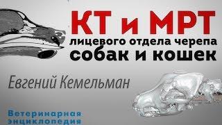 КТ, МРТ лицевого отдела черепа у собак и кошек