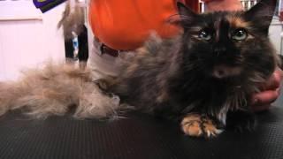 Furminator для кошек в действии