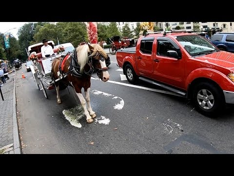 Horse Urinates Near Cyclist In The Middle Of The Street