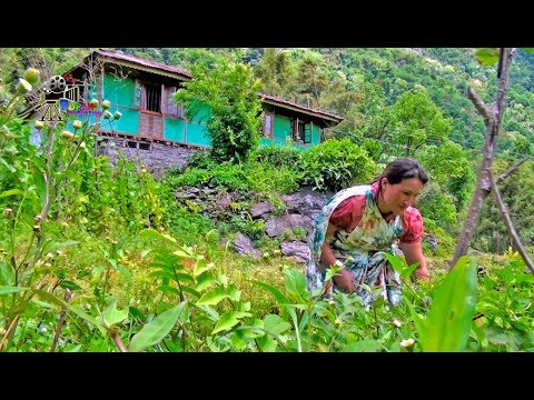 RURAL LIFE IN SIKKIM, INDIA ... Part - 10