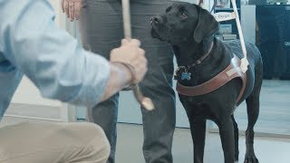 Interacting with guide dogs