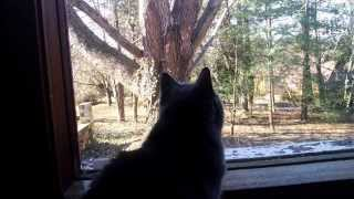 Gray Cat espies a squirrel in a tree — through Google Glass