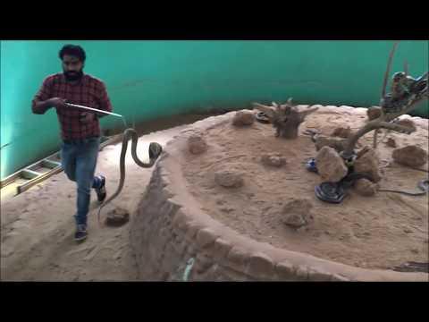 About Snakes from snake Expert of Parassinikadavu snake park