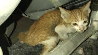حالة انقاذ قطة علقت داخل مكينه سياره 🐈😫