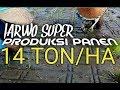 Gambar cover Dengan Metode JARWO SUPER Produksi padi capai 14 TON per HEKTAR