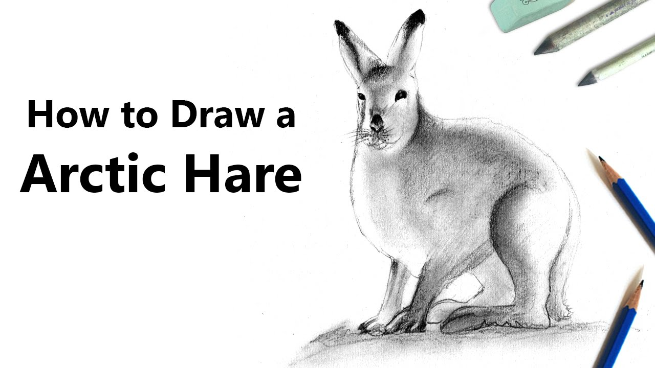 How To Draw A Arctic Hare With Pencils [time Lapse]