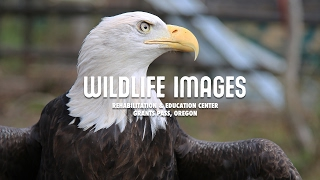 Wildlife Images Rehabilitation & Education Center in Grants Pass, Oregon