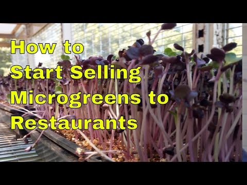 How to Start Selling Microgreens to the Restaurants