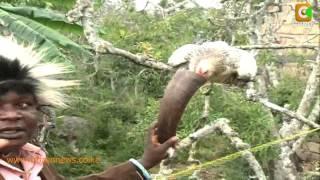 The Miraa'cle Tree Part 2