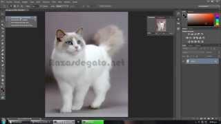 Eliminar marca de agua con Photoshop con borrar según contenido