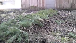 видео Теплая грядка под ранние огурцы