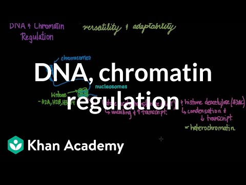 DNA and chromatin regulation | Biomolecules | MCAT | Khan Academy