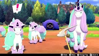 Pokemon Shield: Camping with my Galarian Rapidash and four Galarian Ponyta.