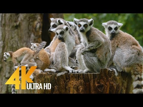 4K Wild Animals in Wroclaw ZOO, Poland - Relax Video with Floating Music | Urban Life