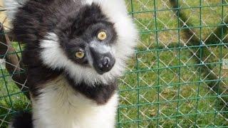 Darıca Hayvanat Bahçesi (Özel Çekim) Faruk Yalçın Zoo