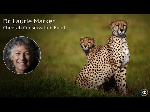 Cheetah Conservation Fund · Dr. Laurie Marker · SF Expo 2016