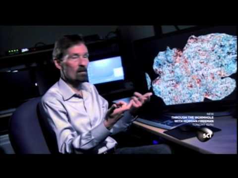 fMRI and sight, interpretation