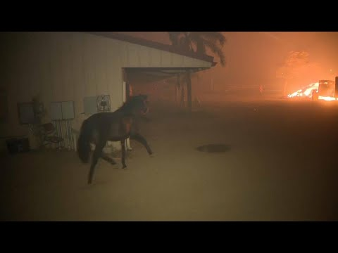 McCabe - WATCH: These Firefighters Rescued a Horse While Fighting A Fire