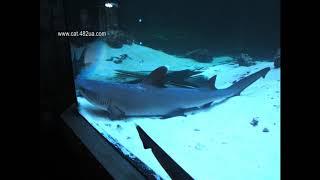 Харьковский океанариум, Немо, экзотические животные, морские рыбы, слайд шоу / Видео