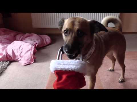 Hunde/Tricks/Dogs   Gegenstand halten