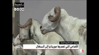 السنغال تعتمد في استيراد الأضاحي على السوق الموريتانية - Medi1TV
