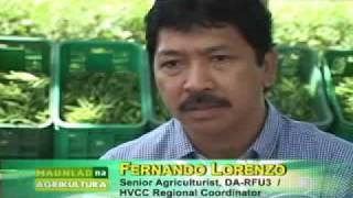MNA OKRA FARMING EPISODE PART 1 05/25/09