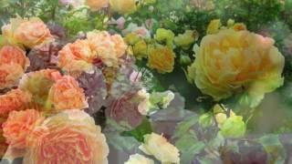 Ароматные цветы для сада (41 фото): видео-инструкция по монтажу своими руками, особенности растений, фото