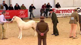 Prif Bencampwriaeth Ceffylau'r Ffair | Supreme Fair Horse Championship