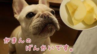 犬はりんごも食べていいみたいなので、果物に目覚めたこうめさんにリン...