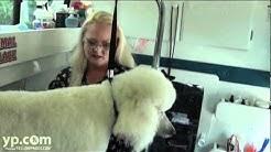 Animal Palace Mobile Pet Grooming | Jupiter FL | Boca Raton