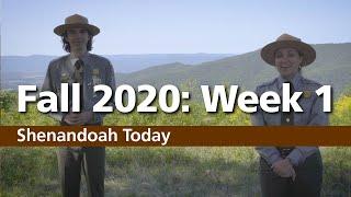 Shenandoah's Fall 2020 Updates