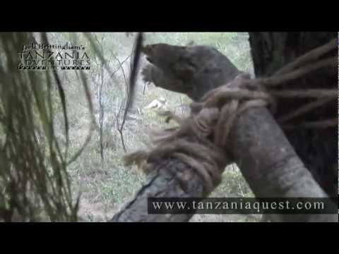 Jack Brittingham's Tanzania Adventures - African Lion Hunt - Selous Game Reserve