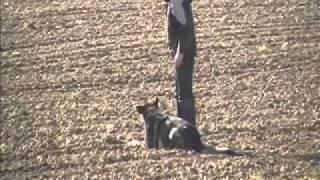 Szkolenie psa.Tropienie trening.wmv