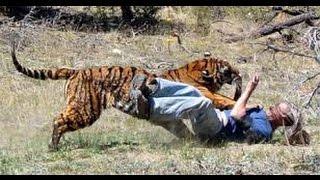 Hổ dữ xổng chuồng tấn công con người đến chết