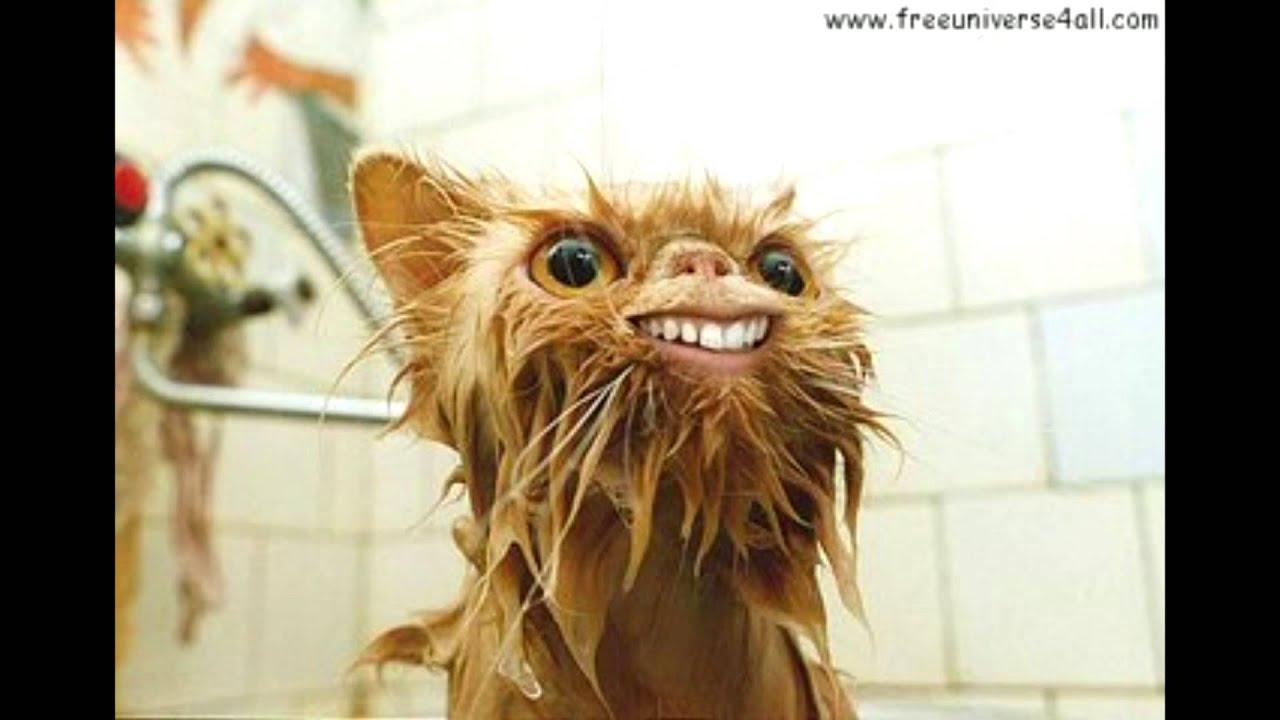 Derp Cat Gif