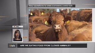 هل نأكل الحيوانات المستنسخة؟ – utalk   3-7-2015