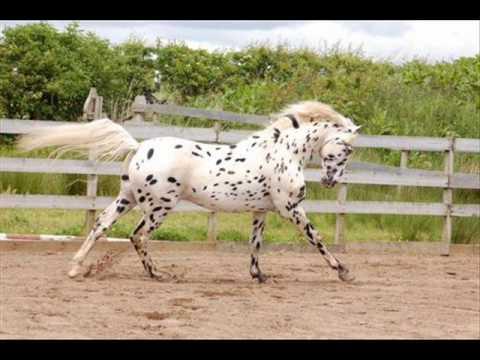 Knabstrup horses.wmv - YouTube
