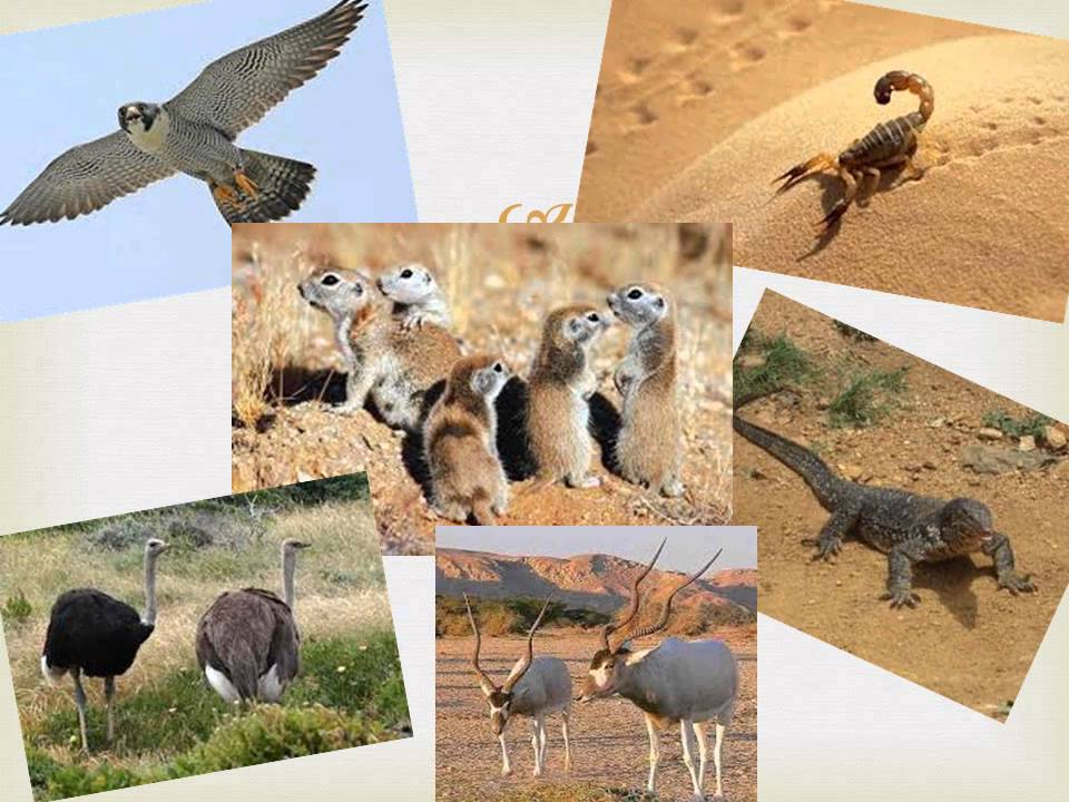Animals and Plants of the Sahara Desert - YouTube