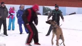 Тренировка по большому рингу Кемерово - собака Инди