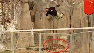 中国河南省にある動物園で、、男が見学用のリフトからトラの檻にダイブ...