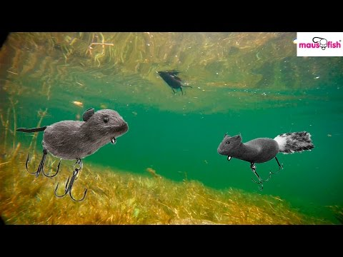 Underwater fishing lures | Bass fishing lures in action | Fishing lures in action | Fishing video