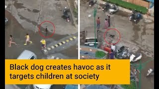 Black dog targets children at KDP Grand Savannah