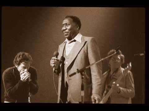Rollin' And Tumblin' (Live) : Muddy Waters