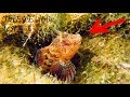 Diving in Black Sea ThiEYE i60e action camera  2k video test