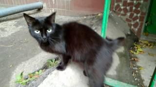 Что творится в городе? Нашествие черных котов.