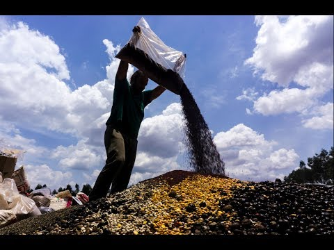 Xingu, stories about forest products | Seeds
